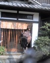 2008_0217_004
